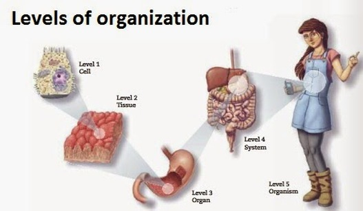 cellular speciliazation in multicellular organism health and social care essay But how did multicellularity evolve from one cell to many: how did multicellularity is that the evolution of multicellular organisms occurred multiple.